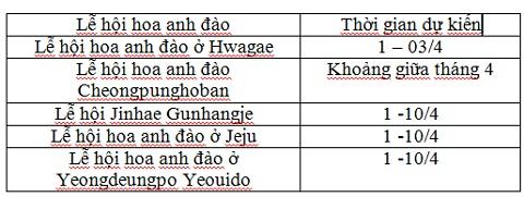 di-dau-lam-gi-vao-mua-hoa-anh-dao-cua-han-quoc-3