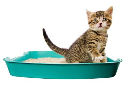 kitten in the litter box, isolated on the white